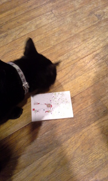 Thx you for da card @AutumntheDoxie.