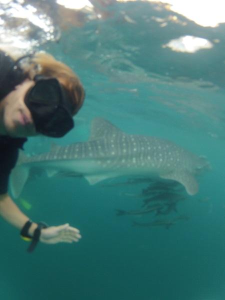 Hij wijst verderop in het water en roept: WHALE SHARK!