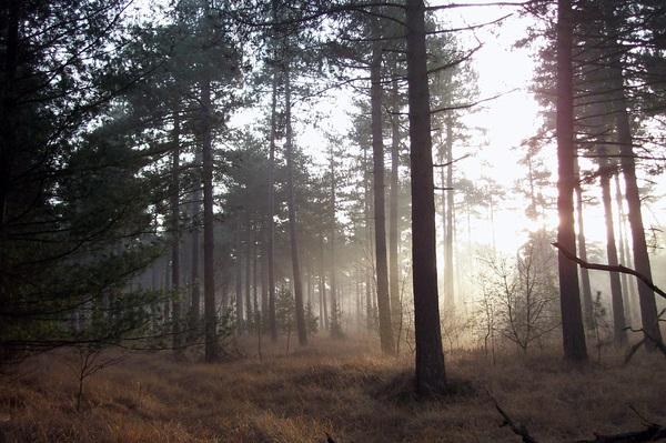 Mooi weer voor een boswandeling... #buienradar