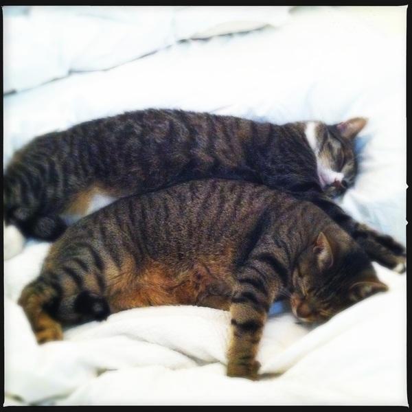Snuggle kittehs