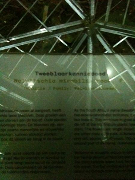 DJ Reinier Klok en cactus Tweeblaarkanniedood in de Hortus. #museumnacht