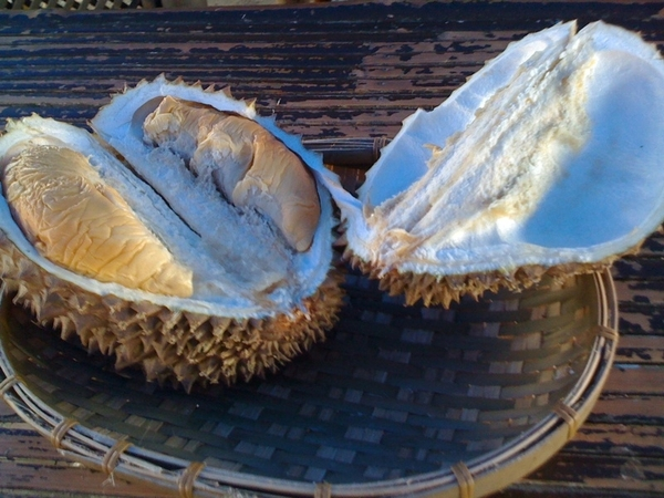 At P25/kilo...Savouring all the variety of durian in Davao.Arancillo, puyat & native.I like the native among all.
