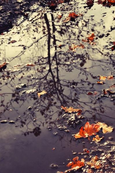 Reflecties in het water #herfst#vallendebladeren #buienradar
