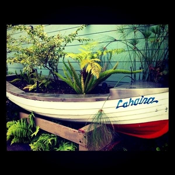 Someone turned a old boat into a planter. Great idea. Ahoy Lahaina!