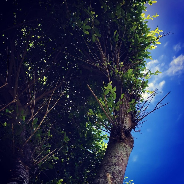 #tree #amami #sky #green #blue #summer #memories #up #dailypic