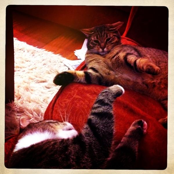 Lazy cat fight