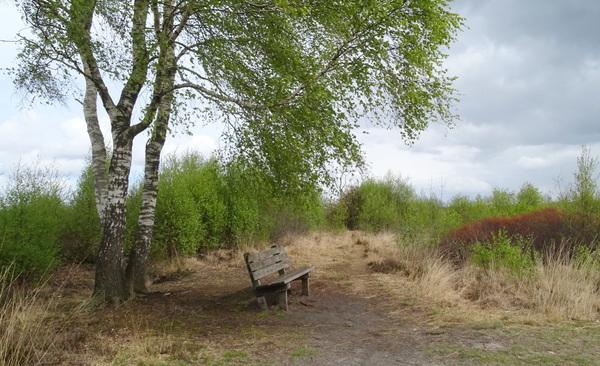 Rustpunt! Natuurgebied de  Engbertsdijksvenen bij Vriezenveen #buienradar
