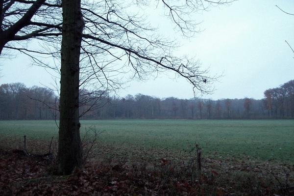 Grijze ochtend. Bergen op Zoom, 27-11-14, ~8.30u, #Zoomland  #buienradar