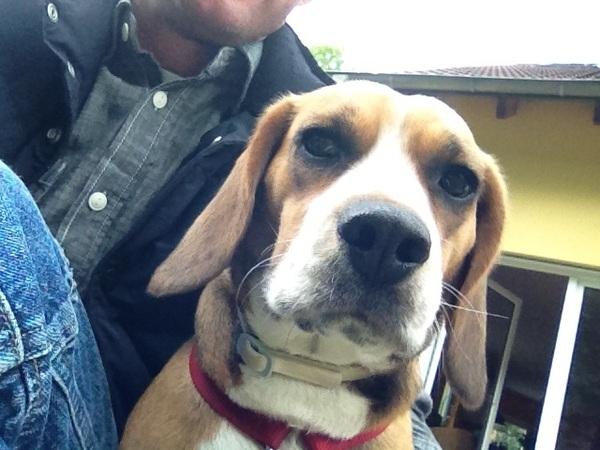 Beagle und ich chillen bisschen im Garten!