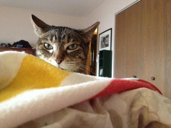 I am a cat bed. This is why I can't get up yet.
