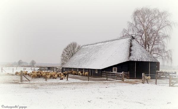 Schaapskooi in wintersfeer! Wierdenseveld Twente! #buienradar