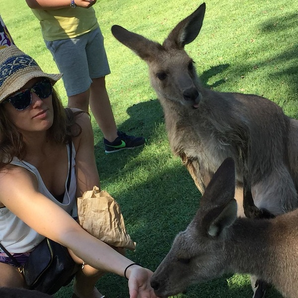 #feeding the #kangeroo #brisbane #koala #sanctury #australia #first #day #good #start