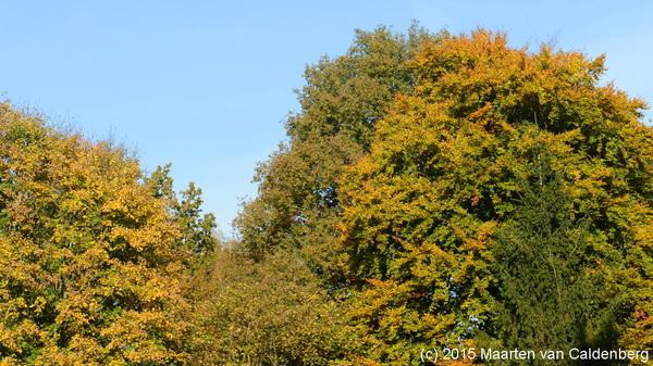 De #natuur is mooi in de #herfst ook in en rond #rosmalen